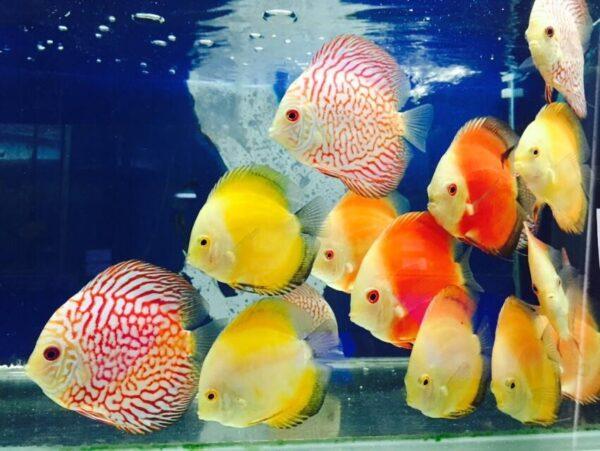 סוגי דגים